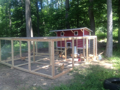 chicken coops - nap town chickens